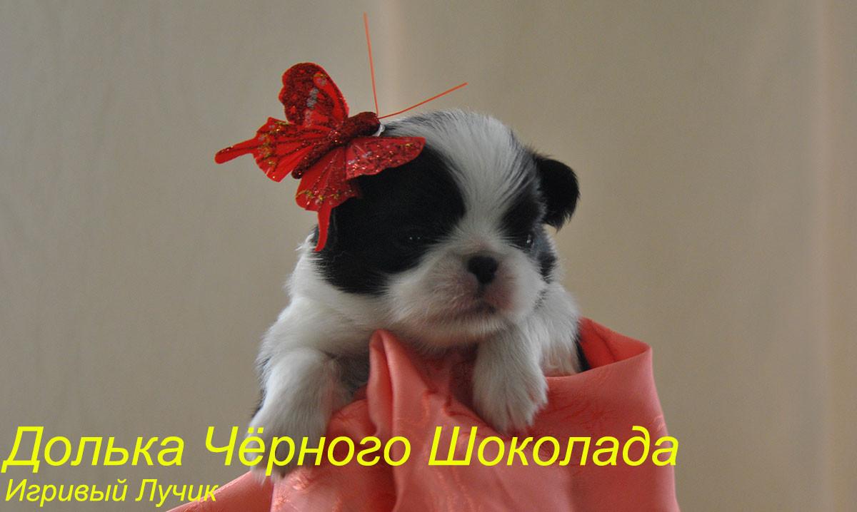 Девочка Игривый Лучик Долька Черного Шоколада