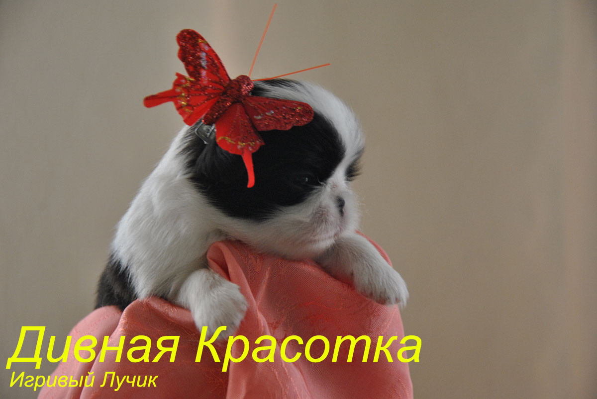 Девочка Игривый Лучик дивная Красотка