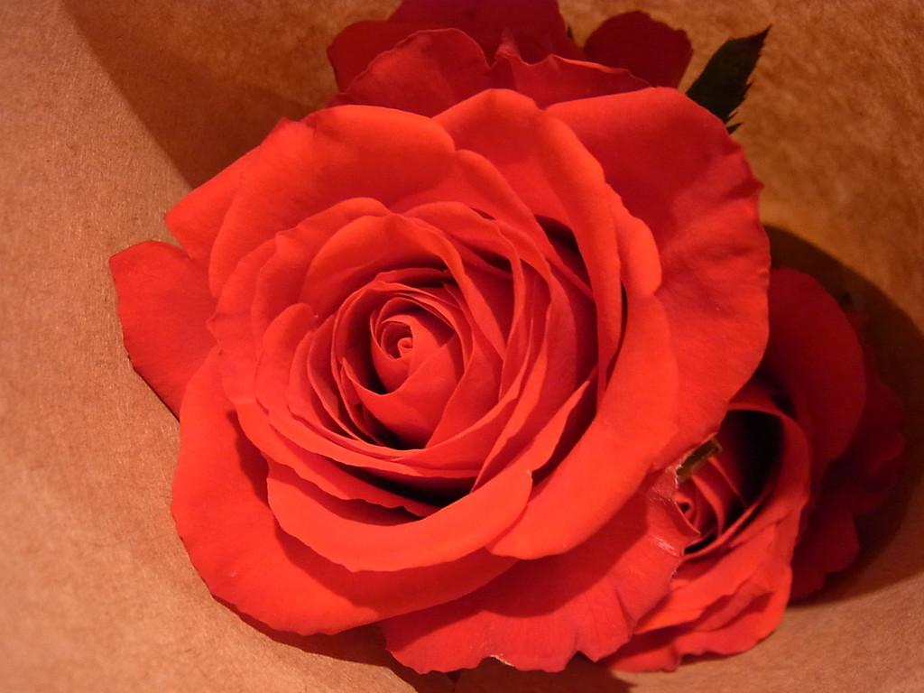 生の薔薇の花を使いました☆彡