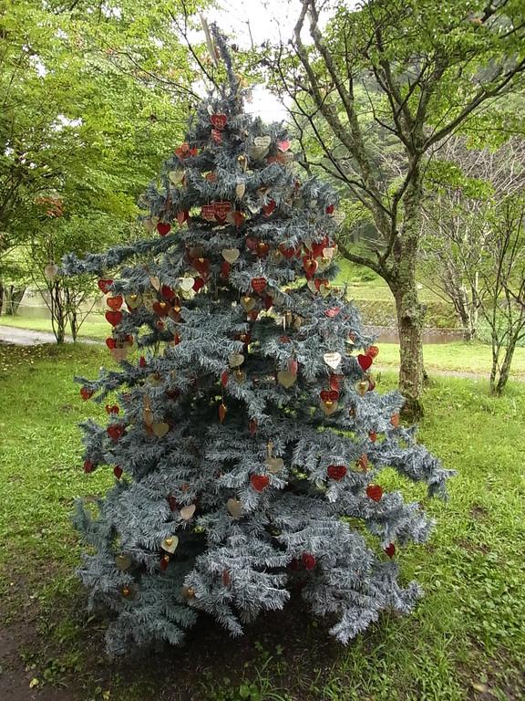 かわいらしいもみの木。