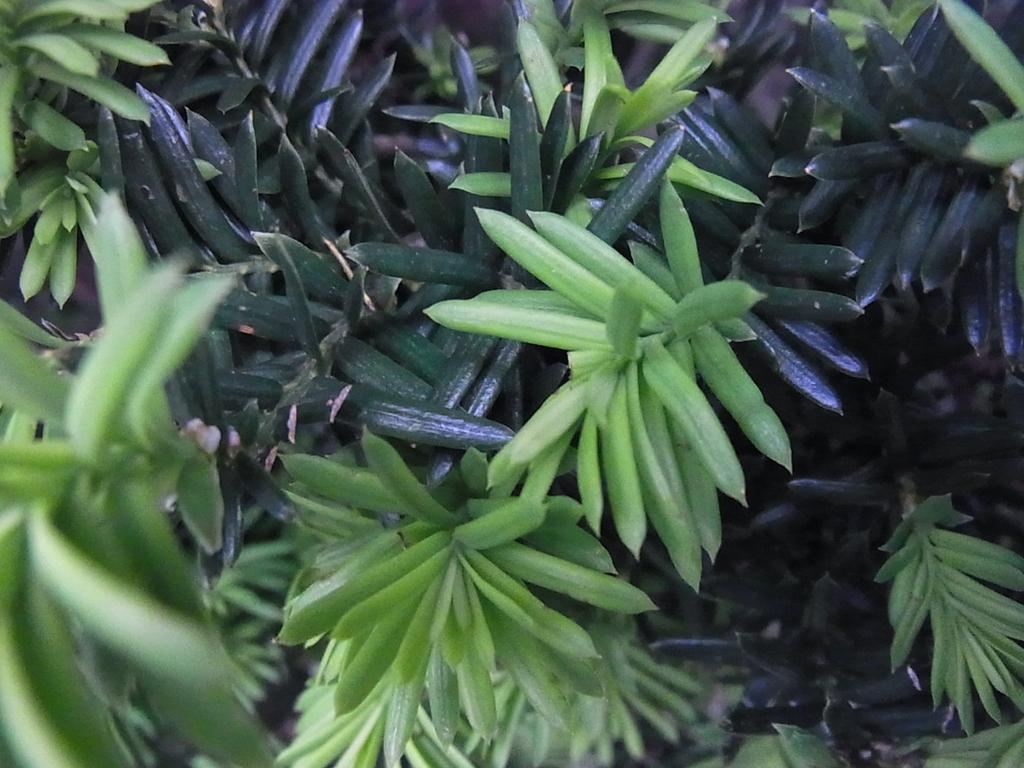 新緑がキレイ!