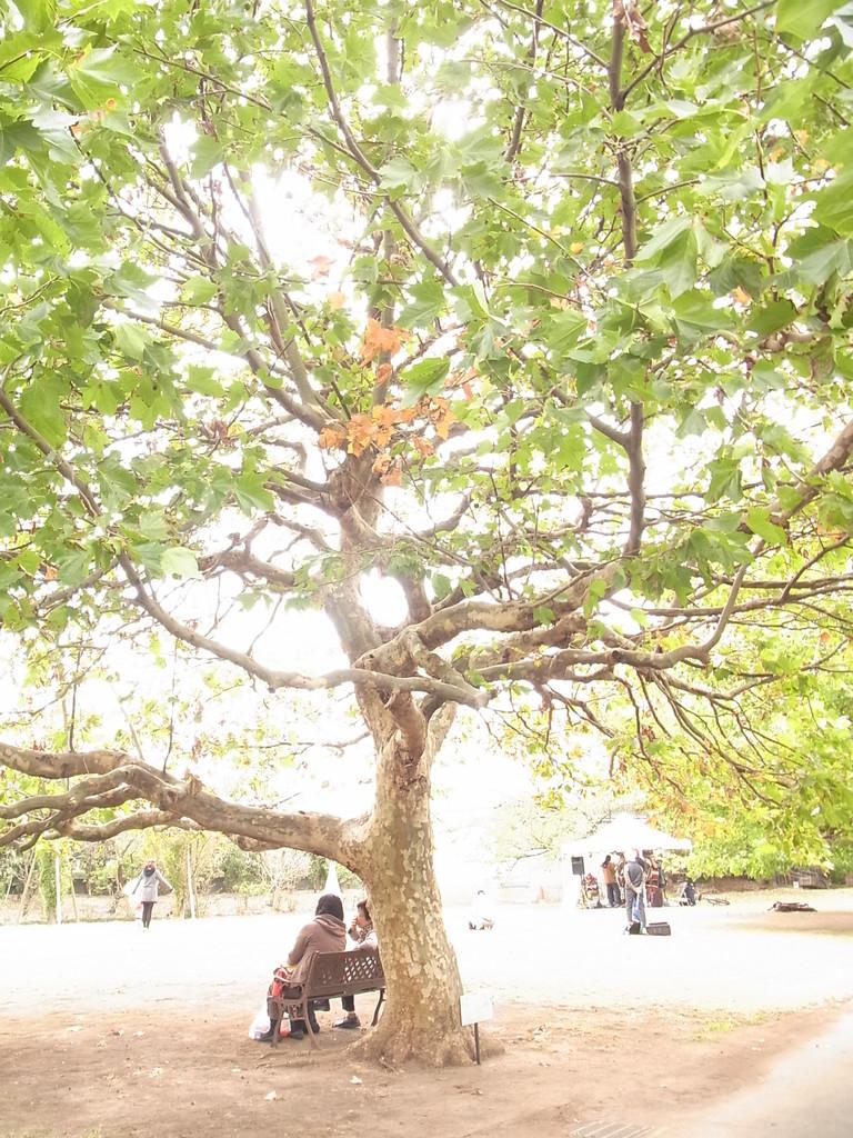 大きな木の下にはベンチ。
