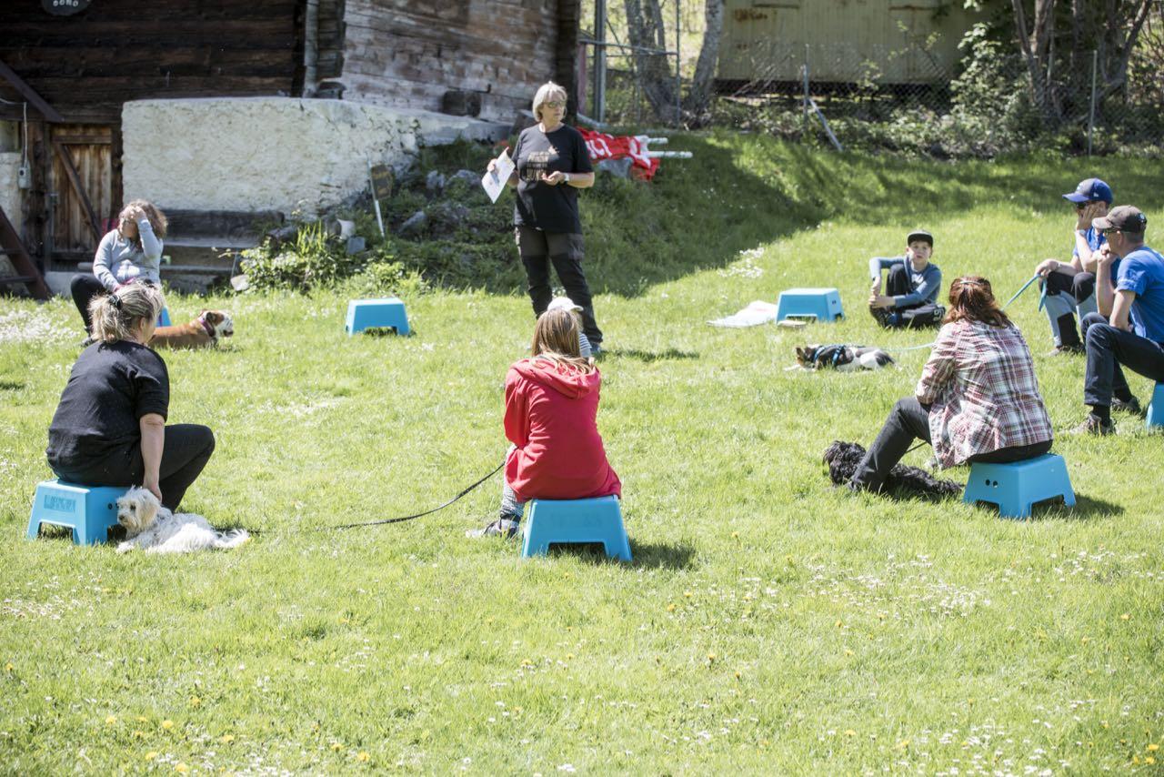 Obligatorischer Hundekurs Wallis mit 9 tollen Mensch/Hundeteams