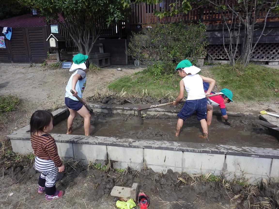 「菜園活動」園でも育てたお米を収穫して田んぼの土をほぐしました。次はそらぐみ(4歳児)が麦を植えて育てます。