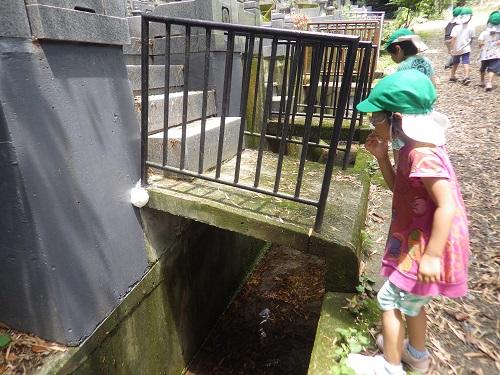 近所の川にモリアオガエルの卵があると聞いてみんなで探しにいくと…あったー!白くて小さい卵がたくさんくっついていて子どもたちも興味津々!
