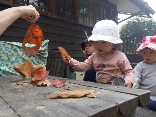 <0歳児>大きい柿の木の落ち葉。目と口をちぎっては「おばけはっぱ」にしてよくあそんでいます。