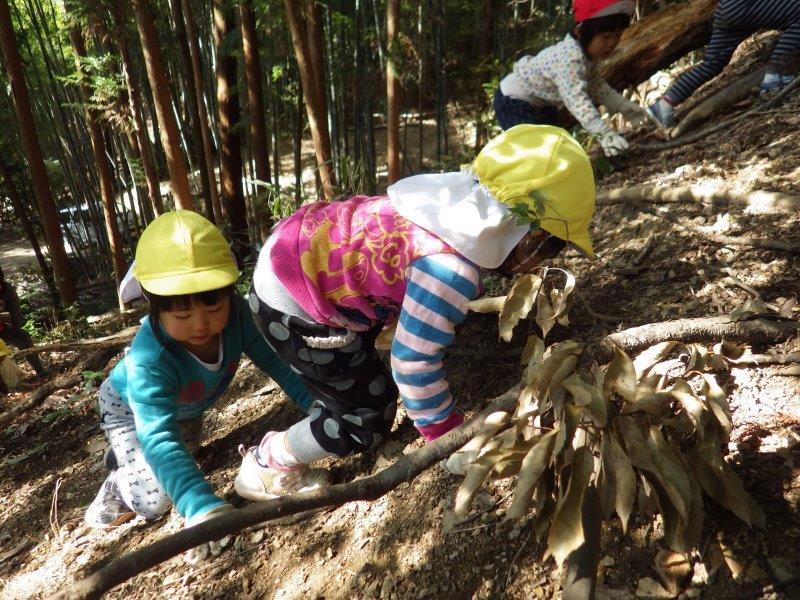 つきぐみ(2歳児)もだんだん体がしっかりしてきて、山の斜面を登るのにもどんどんチャレンジ してます。自然に見守られながらたくましくなっていく子どもたちです。