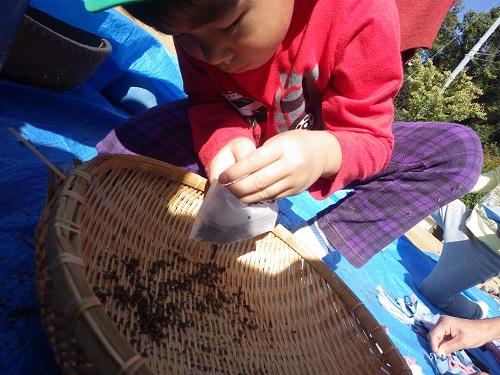 食との触れ合い「畑でたくさん育ったシソの葉でポプリ作りをしましたよ✿いい匂い~(5歳児)」