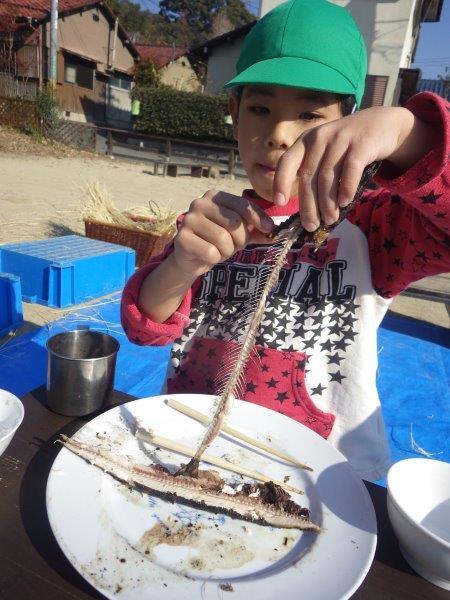 サンマをまるごと一匹食べてみよう!やまぐみ(5歳児)はかまどを用意してまるまる 一匹さんまをいただきました。調理さんに魚の正しい食べ方を教えてもらいながら、きれいに骨を残して上手に食べていましたよ!切り身でないそのままの姿をいただく体験は大切だなと思いました。命に感謝。