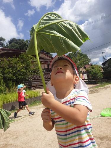 葉っぱの傘!いいでしょ~(3歳児)