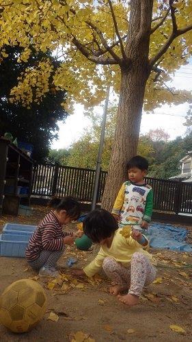 <2歳児>イチョウの葉っぱを集めて、お花のように束ねたり、頭につけて髪飾りにしたりして楽しんんでいます。