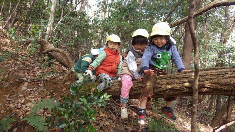 【山あそび】山あそびが始めはちょっと怖かったつきぐみさん(2歳児)。今ではどんどん夢中登って楽しめるようになりました。たくましくなったね!