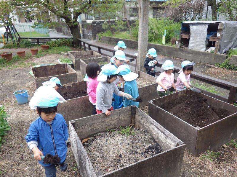 以上児(3・4・5歳児)「畑の土づくり」