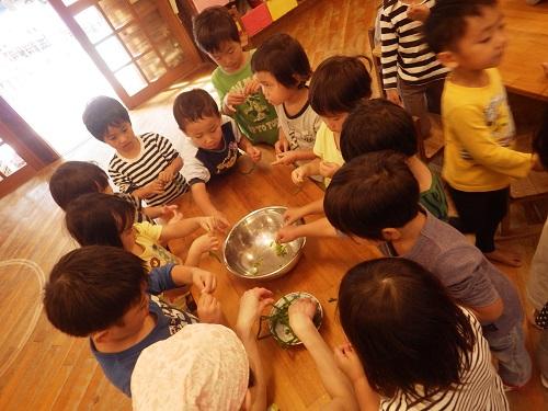 収穫祭「かぜぐみが育てたネギを細かく手でちぎって、豚汁のいれましたよ。(3歳児)」