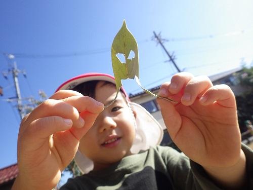 秋あそび「どんぐりの葉っぱに穴を開けておばけはっぱ!『口が裂けちゃって変な形!』(3歳児)」
