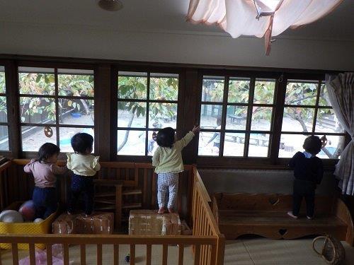 <0歳児>窓から見える秋の園庭はとってもステキ。落ち葉がきれいだなぁ。お兄ちゃんたち楽しそう!