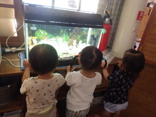 ホールにある水槽のお魚さんが気になる様子で毎日チェック♪なにしてるの~?