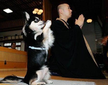 一緒にお勤めしましょう。 仏教勉強の浄光寺です。