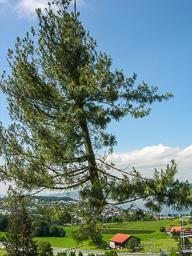 Bäume fällen (nachher)