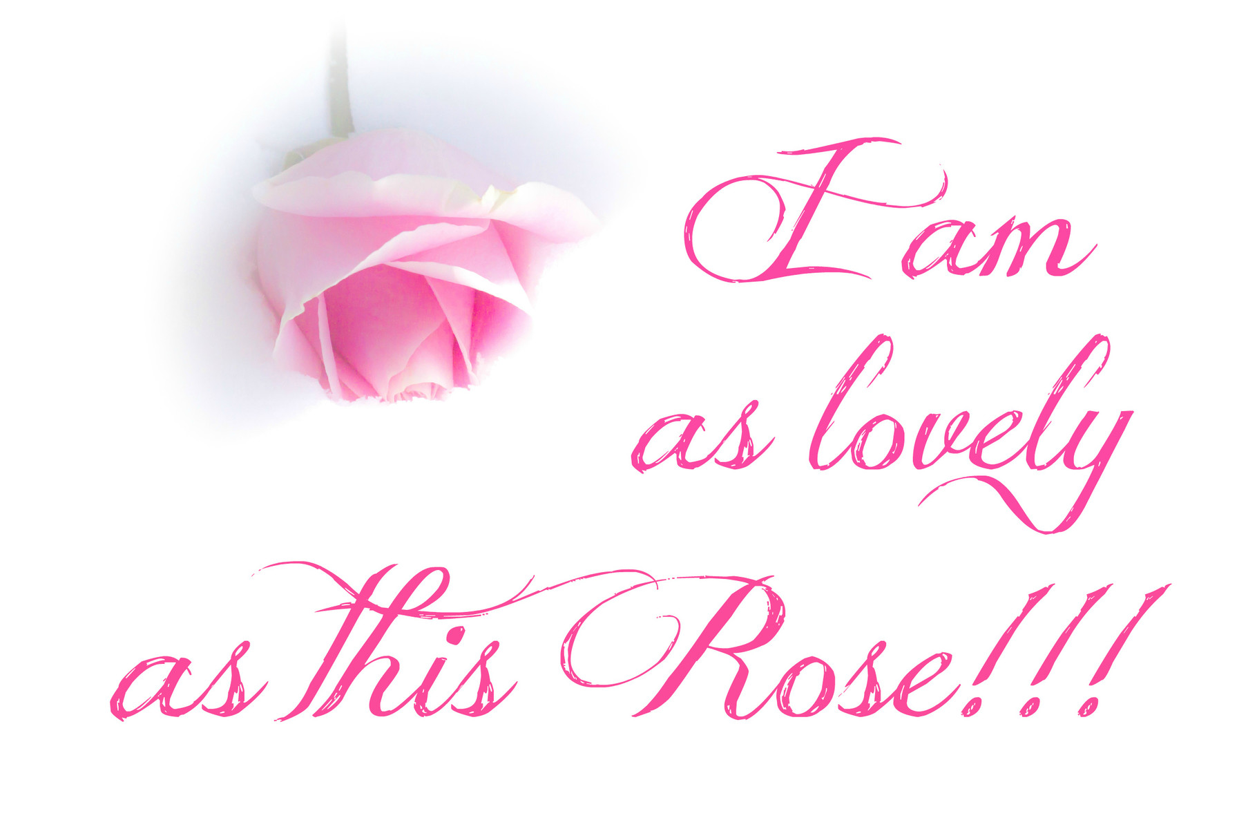 I am as lovely as this Rose!