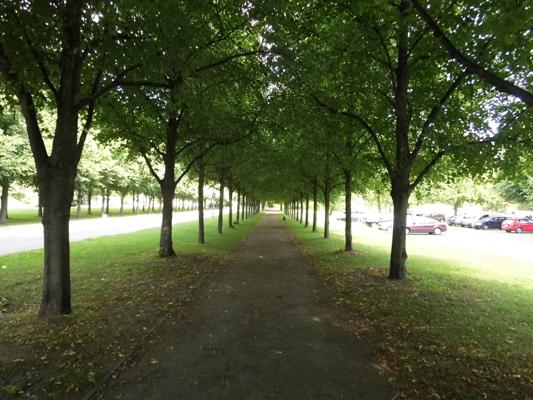 Junge Allee nach umfangreicher Baumpflanzung im Raum Hannover.