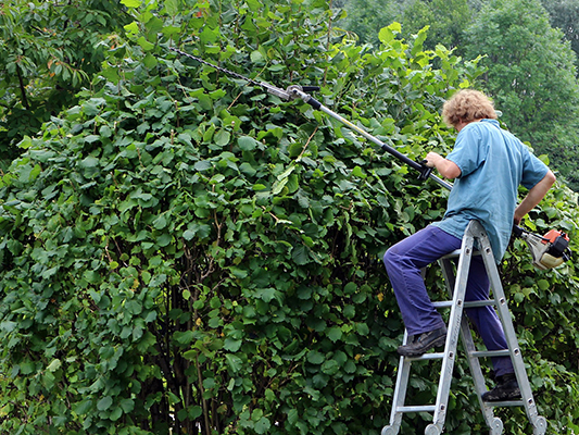Wir fällen Bäume nicht nur, wie schneiden und stutzen sie auch und geben ihnen so Kontur.