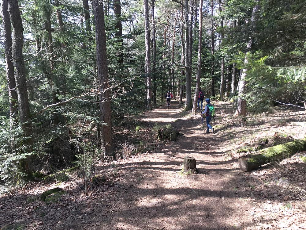 Wandern und Mountainbiken im Elsass