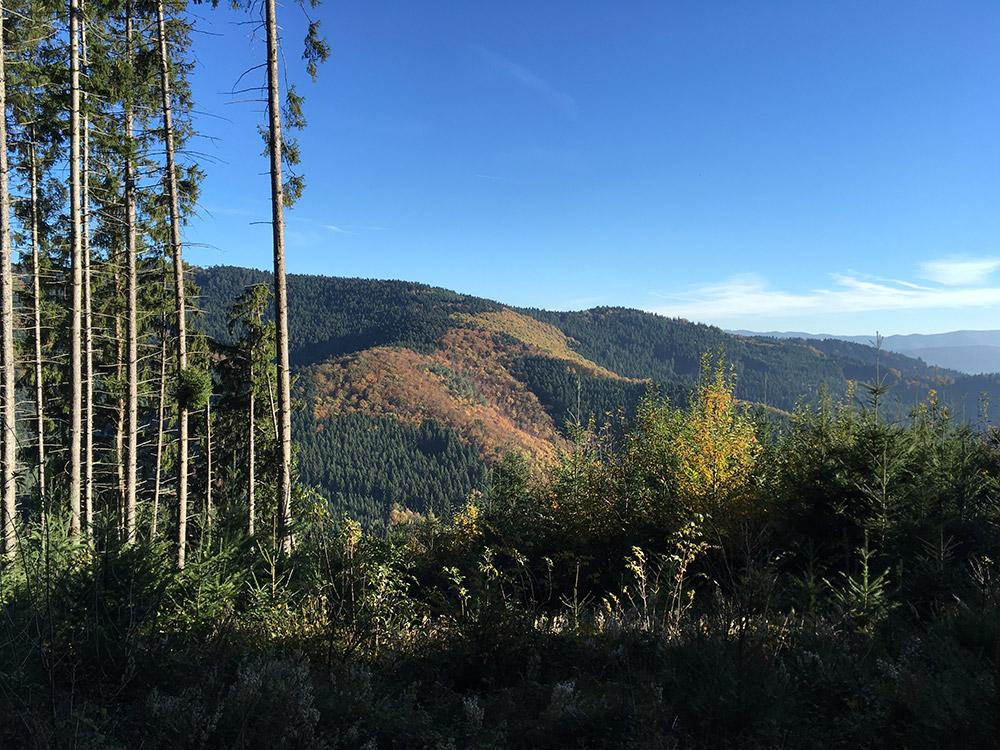 Blick über Schwarzwaldhöhen