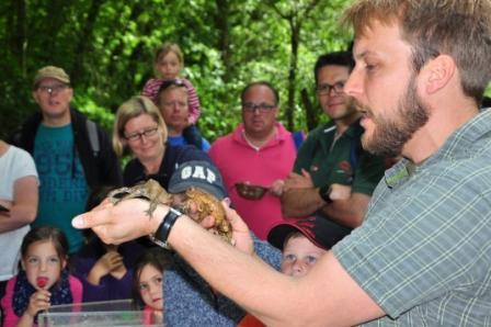 Erdkröten, Foto: Marcel Weidenfeller