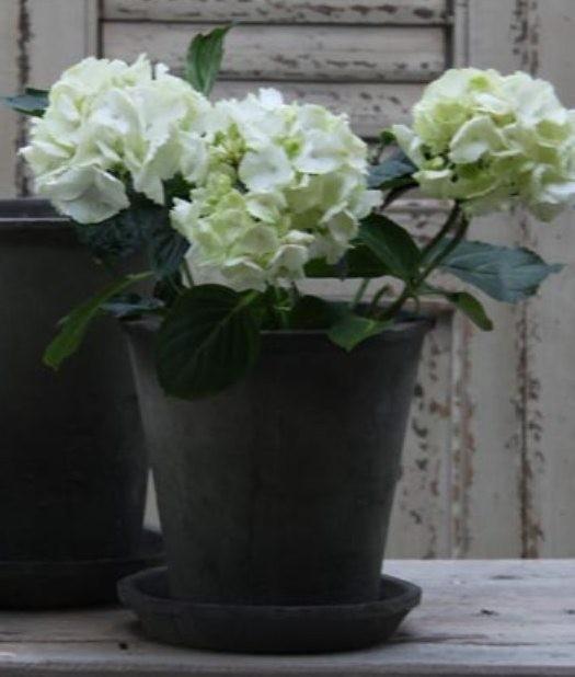 Pflanztöpfe, Körbe und Kisten