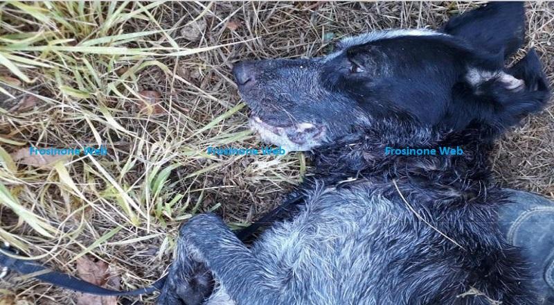 Polpette Avvelenate Uccidono Tre Cani. Scatta L'indagine dei Carabinieri Forestali. Il Responsabile Rischia Due anni di Carcere