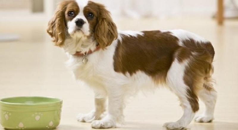 Lascia i Cani senza Mangiare. A Processo