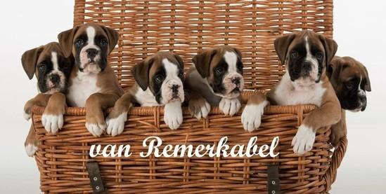 Onze kennel:www.vanremerkabel.nl
