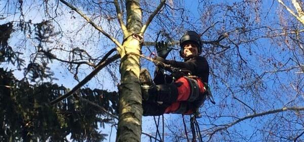 Baumdienst Dirk Büttner aus Tharandt berät Sie persönlich zu Ihren Anliegen rund um Baumfällungen, Baumpflege, Entsorgung, Holz häckseln, Wurzelstockfräsen und vieles mehr.