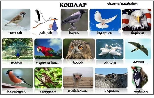 птицы на татарском