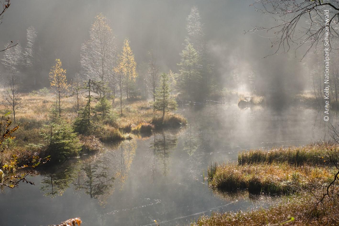 Der Buhlbachsee, Karsee im Nationalpark