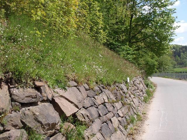 Habitat von Scolitantides orion. - Mittweida, Liebenhainer Mühle 07.05.2008 - S. Pollrich