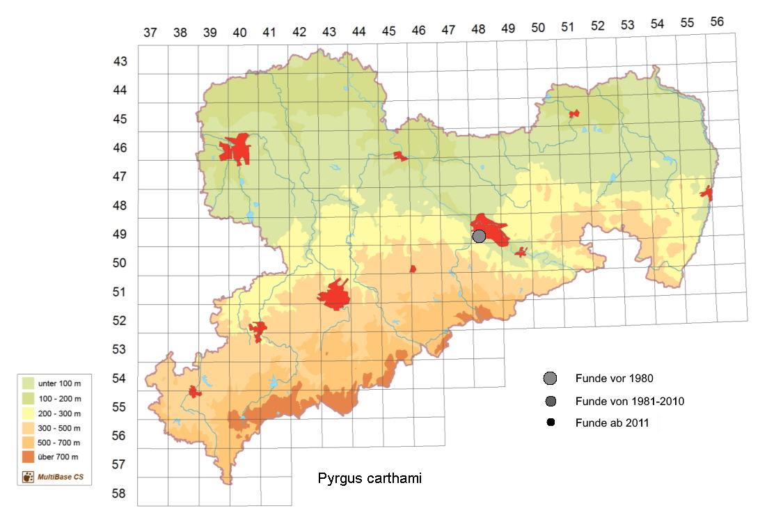 Steppenheiden-Würfel-Dickkopffalter, Pyrgus carthami, in Sachsen, Tagfalter Pollrich