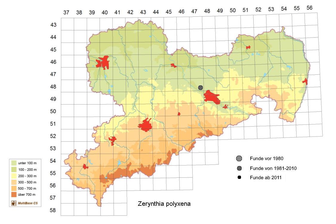 Zerynthia polyxena, Osterluzeifalter, in Sachsen, Tagfalter Pollrich