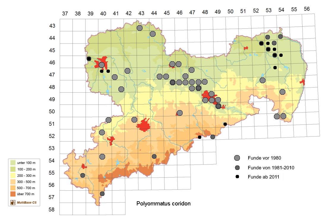 Silbergrüner Bläuling Polyommatus coridon in Sachsen Tagfalter Pollrich