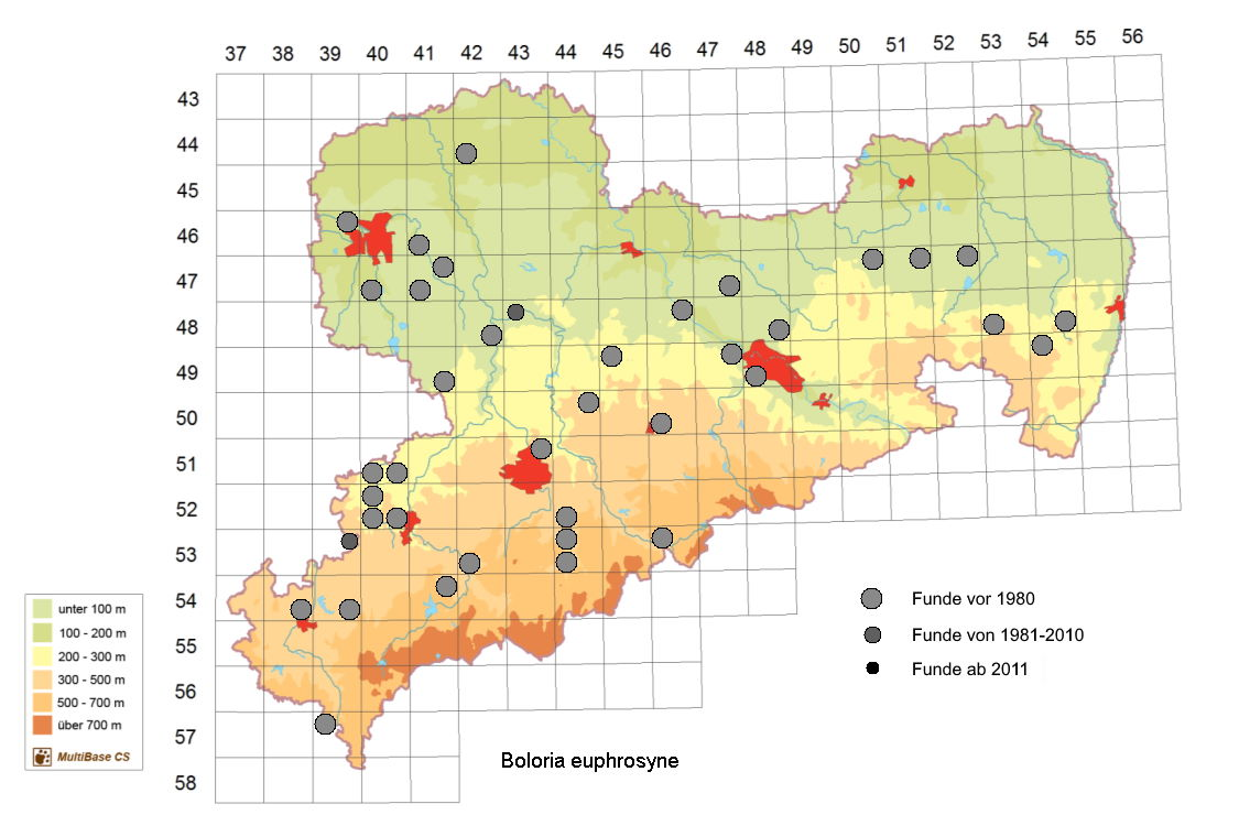 Silberfleck-Perlmutterfalter Boloria euphrosyne in Sachsen Tagfalter Pollrich