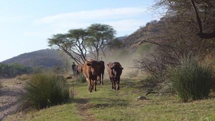 Rinder in Düsternbrook