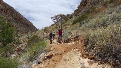 Auf der Suche nach Bergzebras