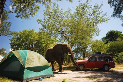 Gast auf der Campsite