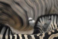 Effektvolle Zebrastreifen