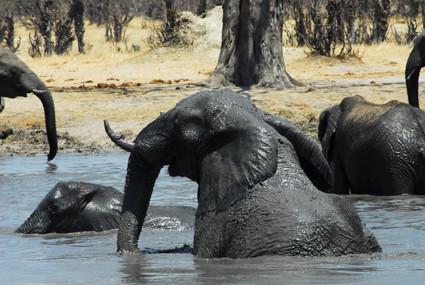 Badespaß in Zimbabwe