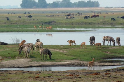 am Chobe, Blick nach Namibia
