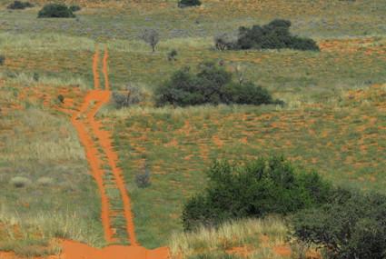 auf und ab durch die roten Dünen