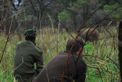 zu Fuß bei den Nashörnern