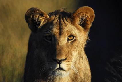 frühmorgens in der Kalahari